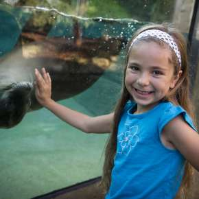 Girl with sea lion at the Fort Wayne Children's Zoo