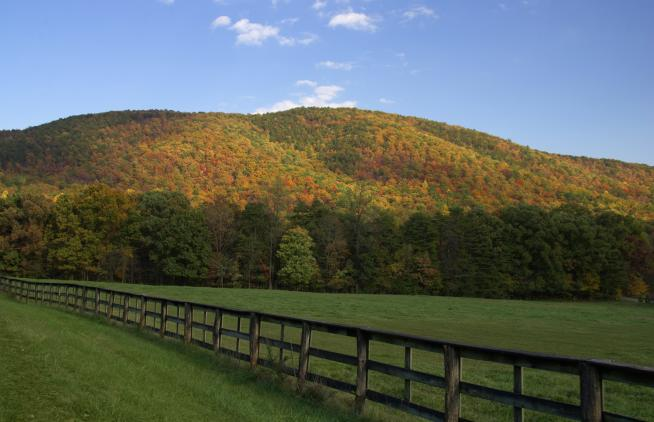 Every autumn the changing colors of the leaves turn virginia s blue