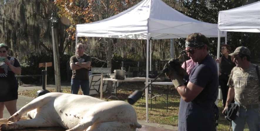 Boucherie: Cajun Art of Communal Butchering