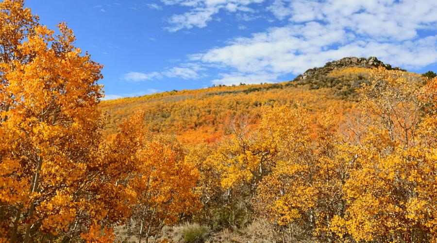 Sage Hen Summit 2 Fall Colors
