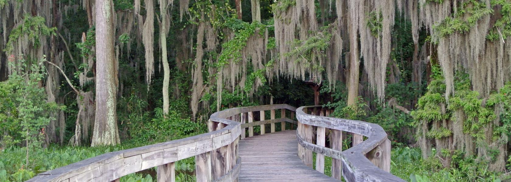 Swamp Boardwalk