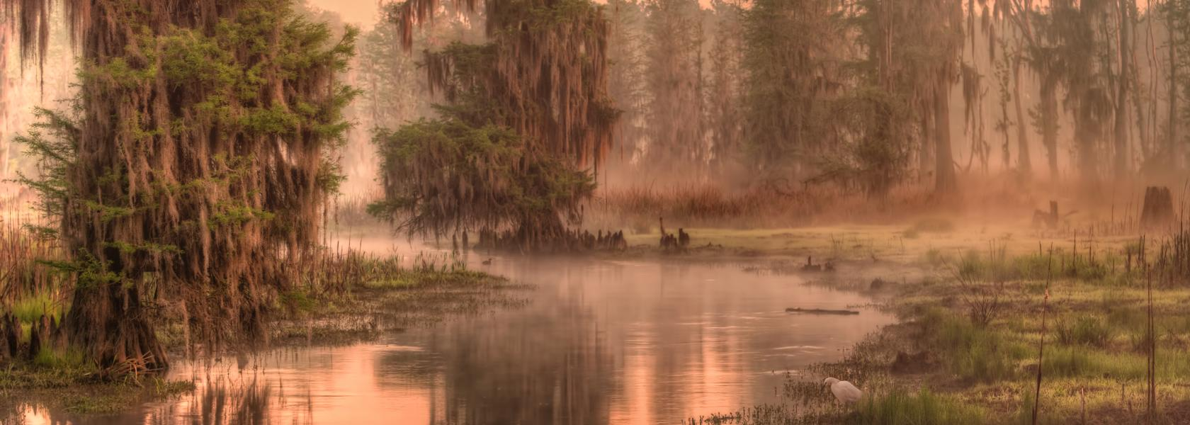 Phinizy swamp morning with crane