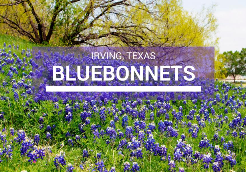 Irving Texas Bluebonnets Guide