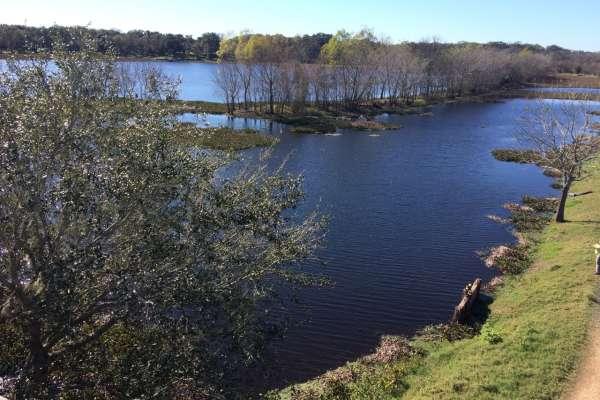 Escapada a Brazos Bend State Park, un hermoso refugio de vida natural