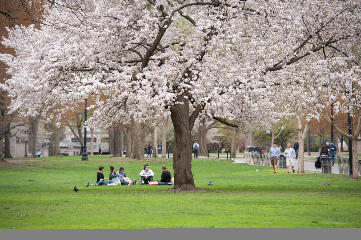 Hotels Near Boston University >> Spring Season Boston   Experience the Flower Show in Spring