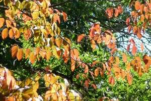 September 15 Fall Color Report