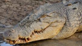 Beware crocodiles.