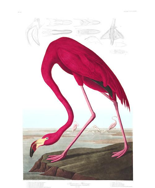 Cuemars Flamingo Print