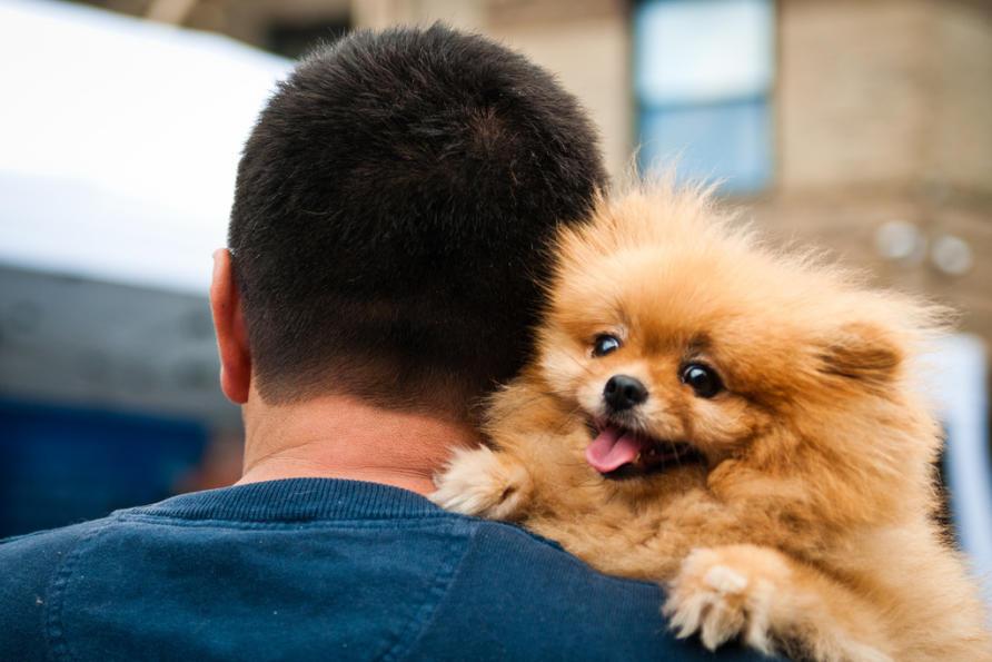 Resultado de imagen para Pomeranian and owner cuddling