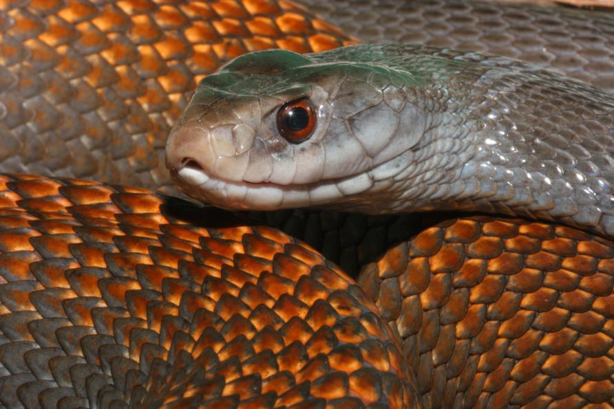 Image Result For Snake Training For