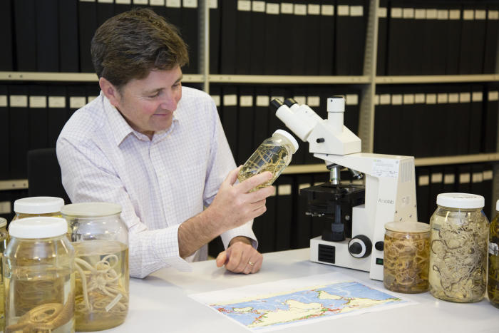 Tim O'Hara with Deep Ocean Biodiversity Map and Brittle Star specimens. Picture: Rod Start