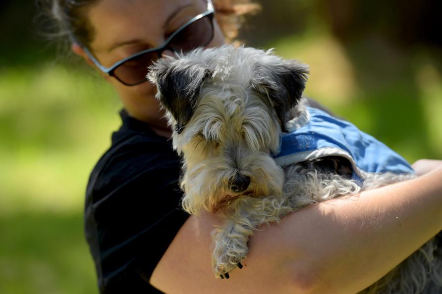 Dog Behaviour Training Nner West