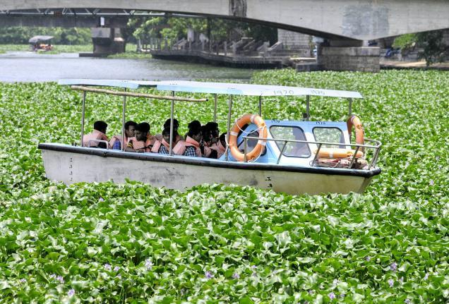 Slow progress: water hyacinth clogging waters in Kerala, India. Picture: The Hindu Times