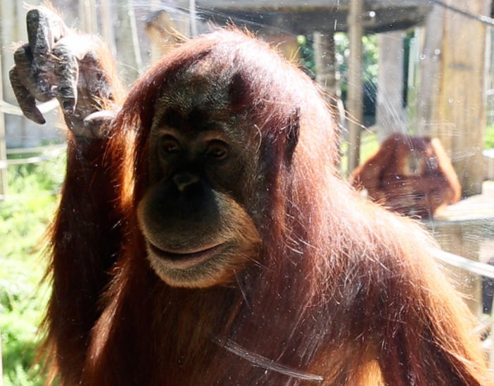 Kiani is fascinated by handbags and what people pull out of them. Picture: Zoos Victoria
