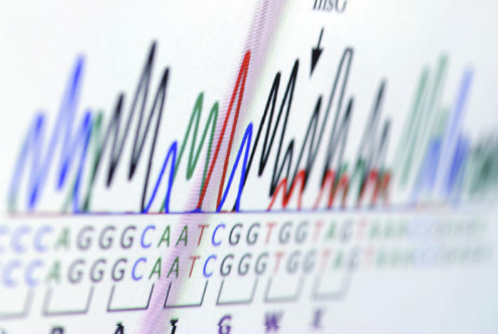 Analysing the genetic differences between those with and without cancer helps scientists identify disease pathways. Picture via iStock