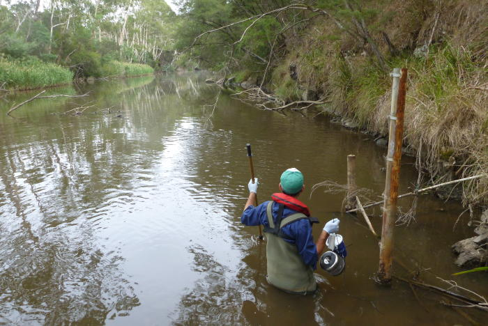 Sourcing micropollutants in the Yarra River using passive samplers. Image: CAPIM