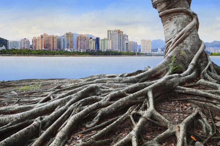 Growth dynamics of eucalypts