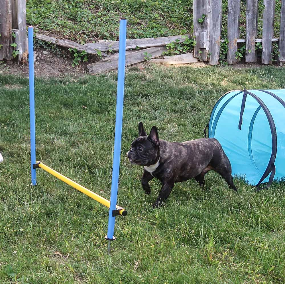 Does Your Dog Need Agility?
