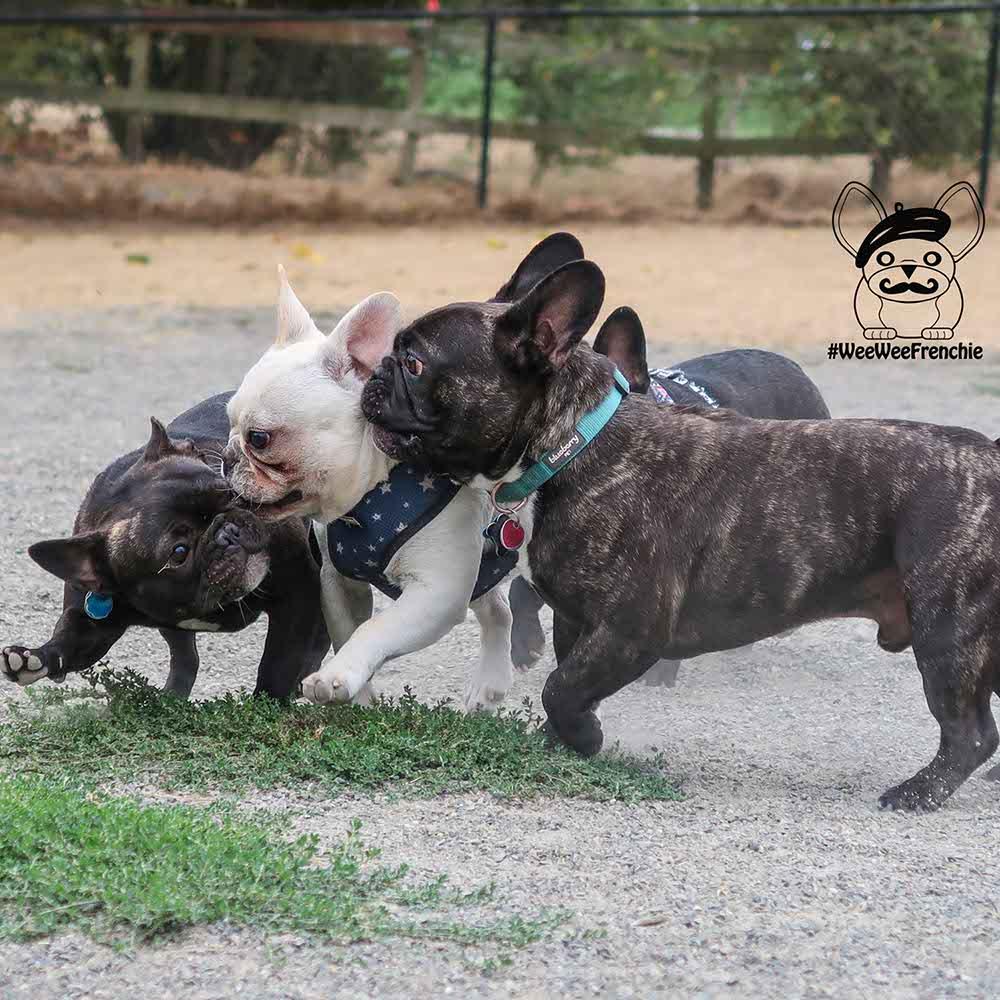 Dog Meet-ups