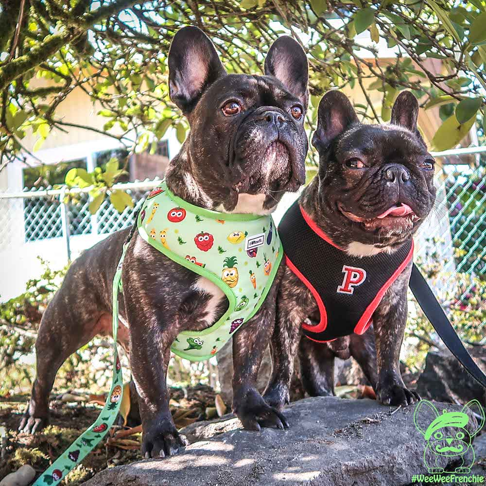 Is a Collar or Harness Better for Your Dog?