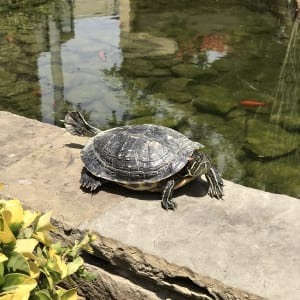Turtles Sweeptakes