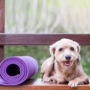 DOGA - Yoga with your Dog